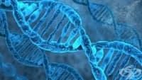 Откриха ново лечение за увредени части на тялото чрез промяна на ДНК-то