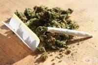 Марихуаната не е първа стъпка към твърдата дрога