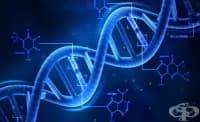 Руски учени откриха начин за опростяване на процедурата за промяна на генома
