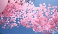 1200 балона полетяха в небето над София в памет на жените, починали от рак на гърдата