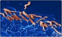 Съществува бактерия, устойчива на радиация