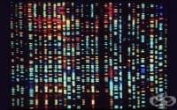 """Кабинетът даде зелена светлина за присъединяването ни към """"Съюз за милион европейски геноми"""""""