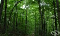 На 21 март отбелязваме и Световния ден на гората