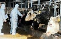 Регистрираха нов случай на луда крава в Испания