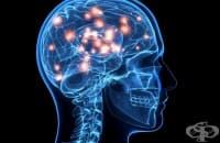 Нови открития за мозъка преобръщат представите ни за него