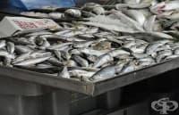 Активни потребители алармират за вредна риба на българския пазар