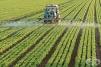 Нуждата от пестицидите за изхранването на човечеството е силно преувеличена