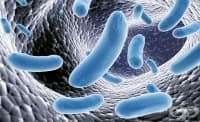 Според учени пробиотиците не са толкова ефективни