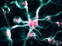 Протеинът АКТ повишава шанса за лечение на рак, Алцхаймер и шизофрения