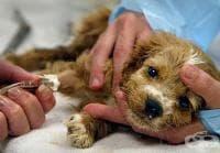 Първата в Европа болница за онкоболни животни отвори врати в Англия