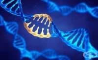 Учени за първи път коригираха ген вътре в човешкото тяло