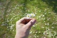 Всеки четвърти в България страда от алергичен ринит
