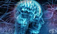 Липсата на физическа активност намалява обема на мозъка и ускорява стареенето
