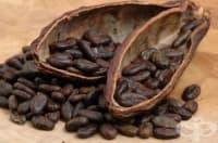 Суровото какао бори отслабващата памет