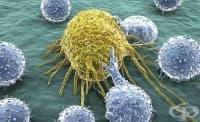 Инсулинът влияе и на имунната система