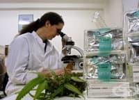 Течна медицинска марихуана намалява епилептичните пристъпи