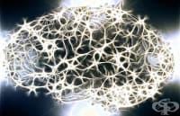 Учени ще използват вируса Зика за лечение на рак на мозъка