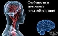 Особености на циркулацията в мозъчното кръвообращение