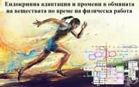 Ендокринна адаптация и промени в обмяната на веществата по време на физическа работа