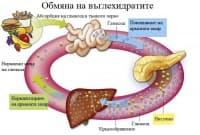 Обмяна на въглехидратите