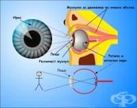 Формиране на зрителен образ