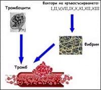 Кръвосъсирване