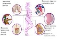 Промени в организма на майката по време на бременността