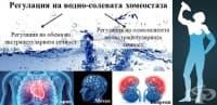 Регулация на водно-солевата хомеостаза
