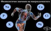 Физиологично значение на макроелементите