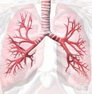 Значение на дихателните пътища