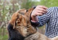 18 неща, които трябва да знаете, ако ви атакува куче