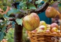 8 овощни дръвчета, които може да отглеждате в домашни условия