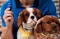 Погрижете се за кучето с 4 етерични масла