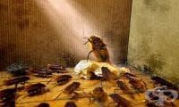 Изгонете хлебарките от дома си с лавандула