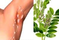 Използвайте женско биле или сладък корен срещу възпаления и подути лимфни възли