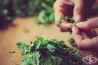 Използвайте младата пролетна коприва за салата