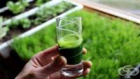 За да предотвратите силното изпотяване, пийте сок от житна трева