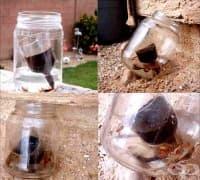 Прогонете хлебарките с утайка от кафе