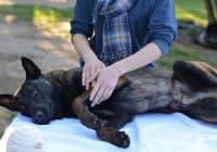 Как да насърчите здравето и спокойствието на кучето с масаж