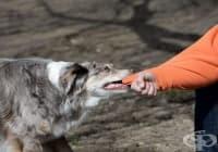 Какво да правите, ако ви нападне куче?