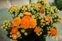 Овлажнете въздуха у дома с тези 5 стайни растения