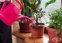 Насърчете растежа на цветята с разтвор от мая и захар