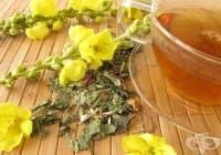 Пречистете белите дробове с чай от лопен