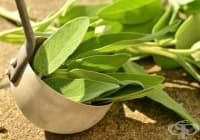Пригответе си вино от градински чай против астения и умора