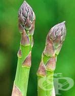 Против махмурлук хапвайте аспержи или други пресни зеленчуци