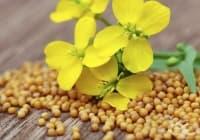 Премахнете миризмата от бутилки и буркани със синапено семе