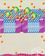 Терапия с блокери на калциевите канали