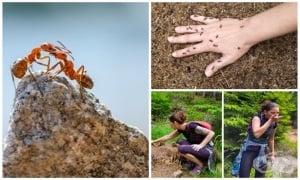 Защо и как мравуняците могат да са полезни за здравето