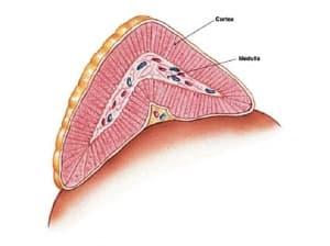 Надбъбречна жлеза