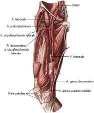 Бедрена артерия